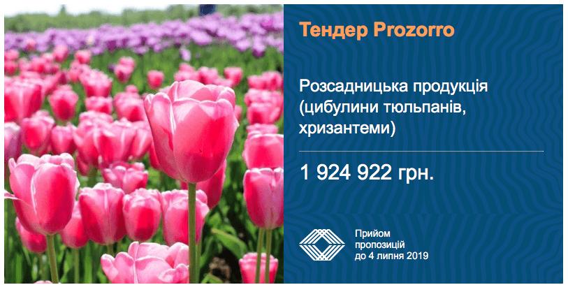 тендер закупівлі тюльпанів